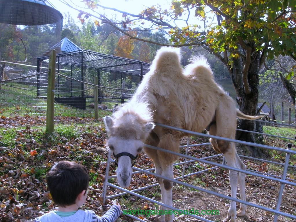Savingsinseconds.com visited Creation Kingdom Zoo