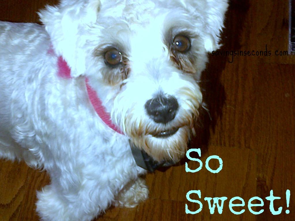 Treats for our furry friend --- savingsinseconds.com