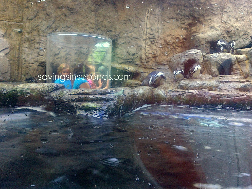 Ripley's Aquarium in Gatlinburg, TN -- savingsinseconds.com #PFTitanicFAM