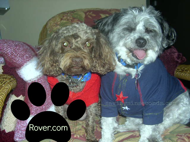 Rover.com can help you find the right caregivers for your furballs.  savingsinseconds.com