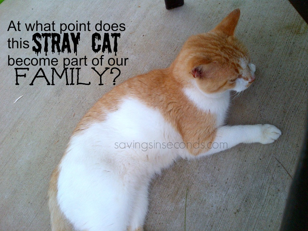 How to get a stray cat to like you