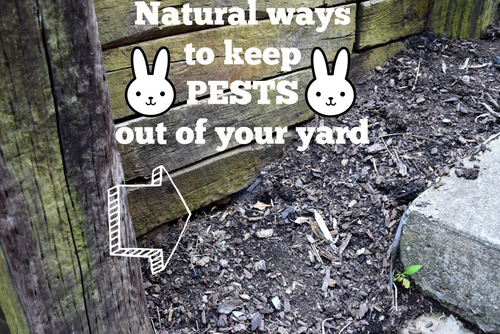 Natural ways to keep pests out of your yard