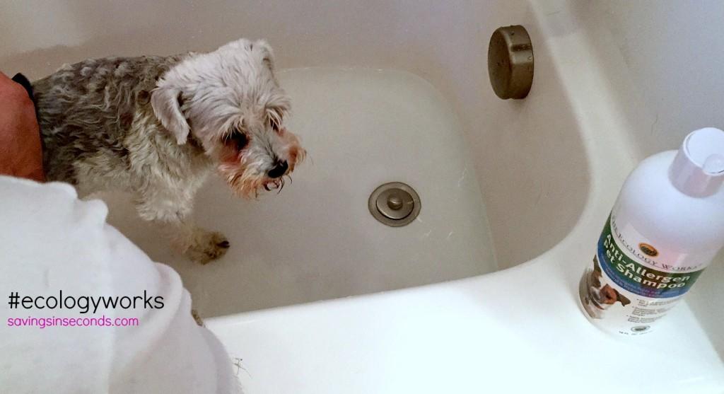 #ecologyworks Anti-Allergen pet shampoo #ad savingsinseconds.com