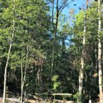 Gatlinburg East KOA Campground in Cosby TN