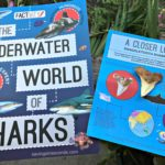 Shark Factivity paperback book + 6 shark teeth US #Giveaway