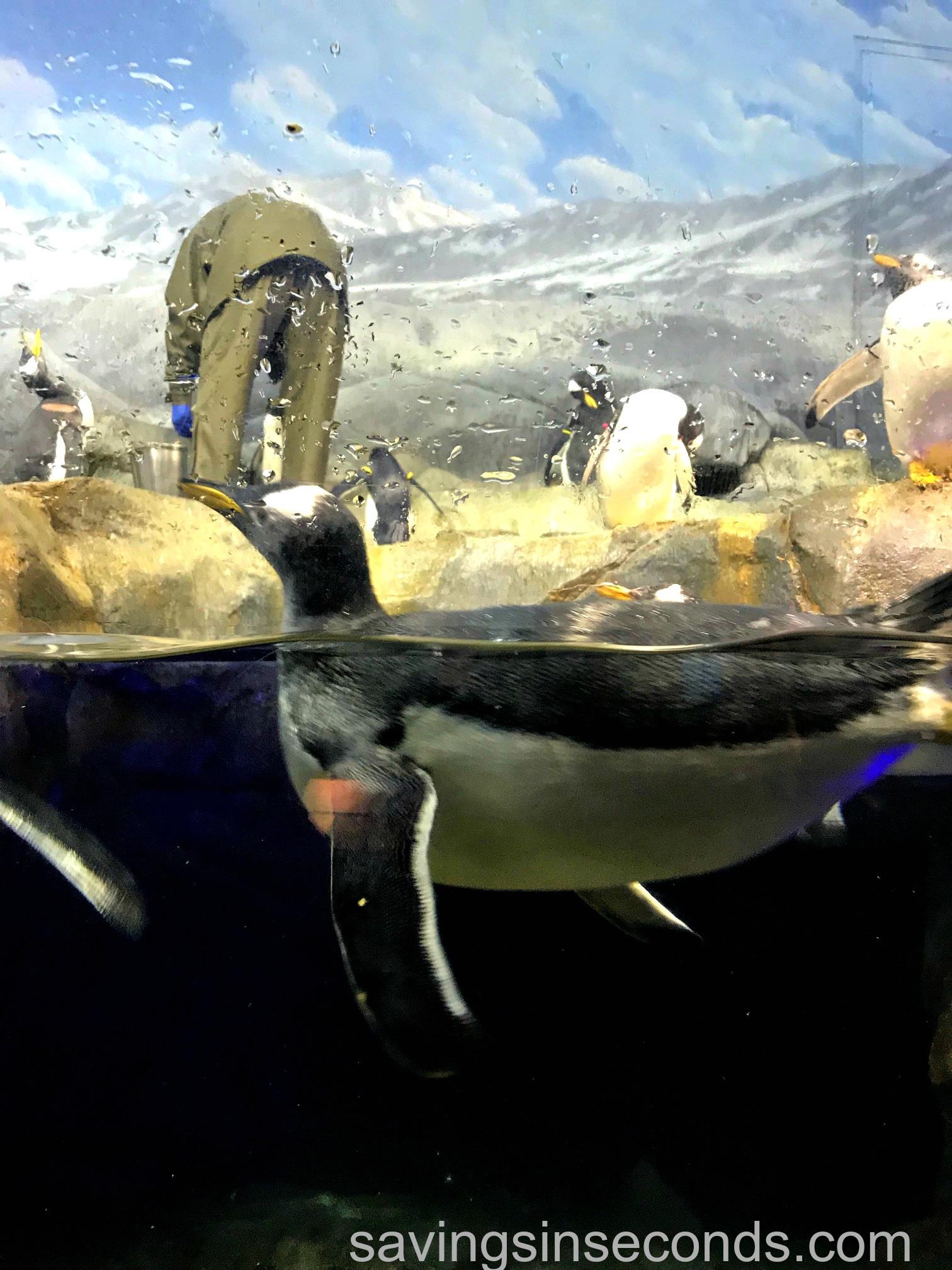 Tennessee Aquarium In Chattanooga Oceans Book